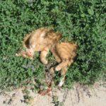 Šanta kočičí – Kokain pro kočky