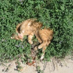 Šanta kočičí - Kokain pro kočky