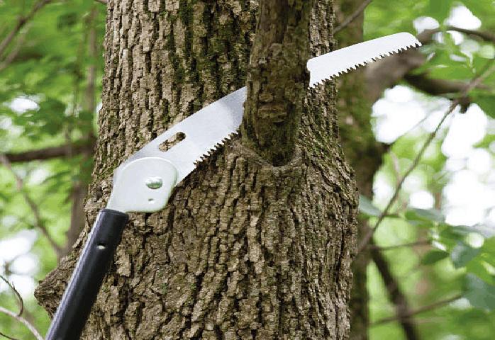 Jak a kdy prořezávat stromy? Vše co potřebujete vědět.
