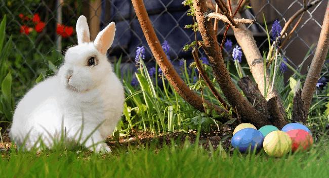 Jak vyrobit velikonočního zajíčka z papíru